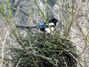 Vögel können im Winter beigefüttert werden