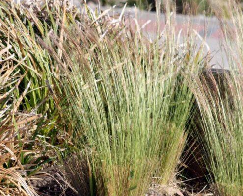 Ziergräser im Oktober bringen Farbe in den Garten
