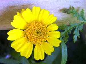 Blumen setzen Farbakzente im Garten