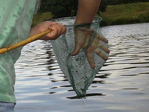 Grillfisch mit Wobbler angeln