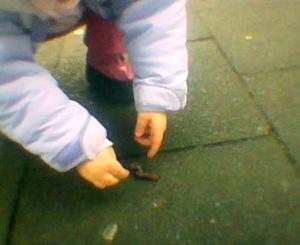 Kind rettet Regenwurm