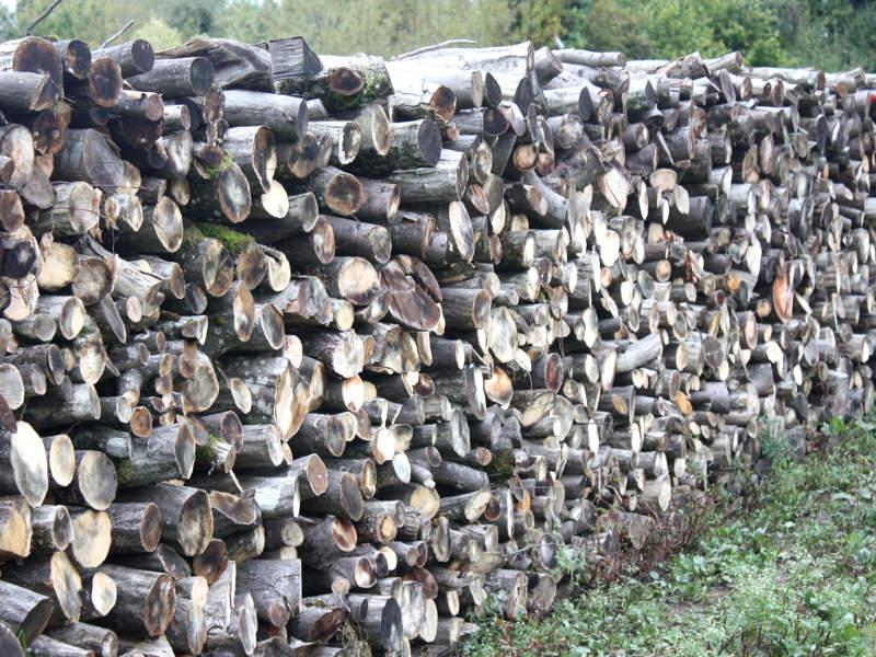 Günstiges Holz für Kamin