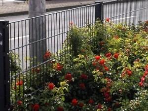 Neuer Gartenzaun - Eine Sache für den Fachmann