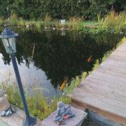 Gartenteich mit Fischen und Deko