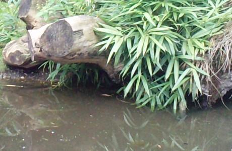 Teich für den Garten