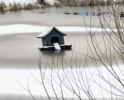 Welche Teichpflege im Winter?