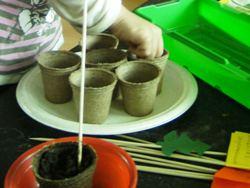 Gärtnern ganz leicht - Jiffy Torfquelltöpfe