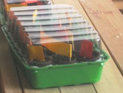 Torfquelltöpfe im Minigewächshaus