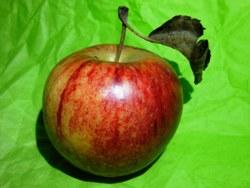 Die letzte Apfelernte der Gartensaison