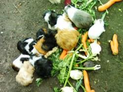Verschiedene Tiere können im Garten gehalten werden