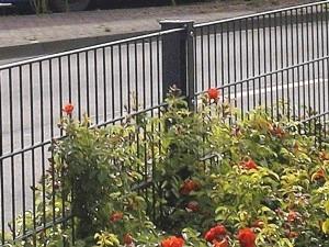 Doppelstabmattenzaun als Gartenbegrenzung