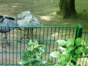 Doppelstabmatten Garten Oder Tierzaun Leicht Selbst Bauen