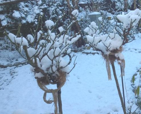 mit Vlies Pflanzen winterfest machen