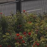 Zaun für´s Grundstück