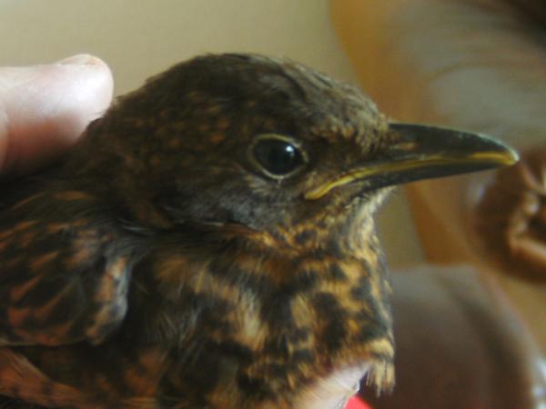 Soll man Vögel im Winter füttern?