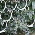 Foto schmiedeeiserner Zaun auf Mäuerchen