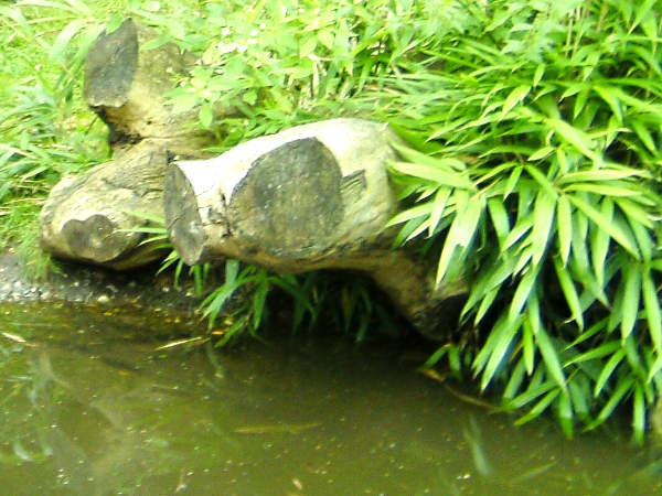 Schwimmteich im Garten