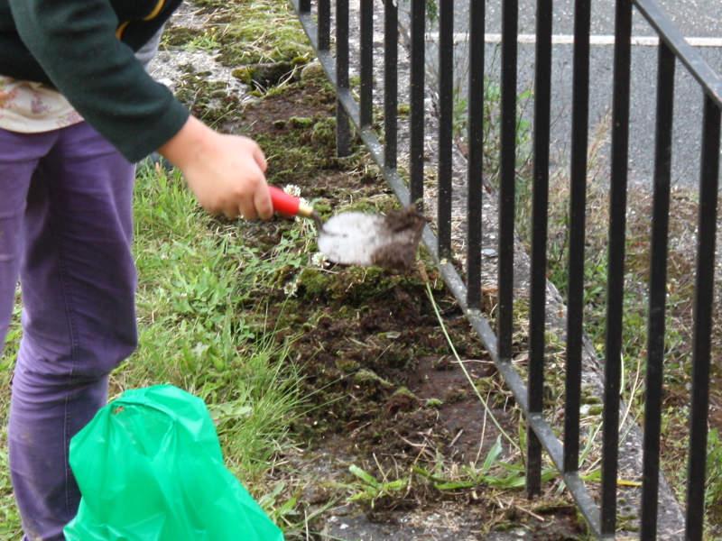 Stein reinigen und Moos entfernen