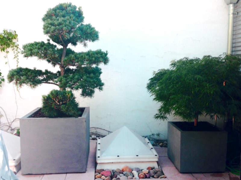 Topfpflanzen überwintern
