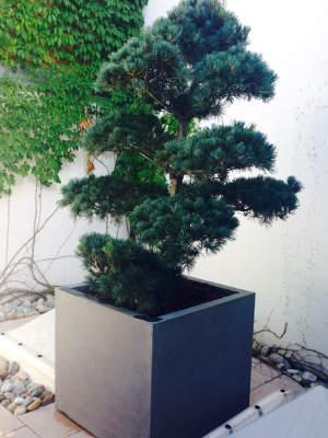 Topfpflanzen im Winter schützen