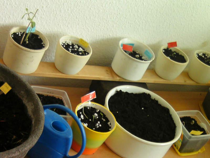 Pflanzen im Blumentopf vorkultivieren