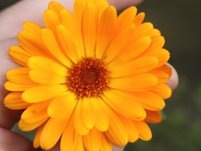 Pflegeleichte Sommerblumen