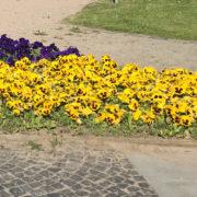 Bodendecker Pflanzen: So leicht lassen sich Flächen begrünen