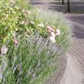 Bepflanzung im Blumenbeet