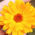 leuchtende Blüten im Garten