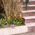 Steintreppe & Blumenbeet